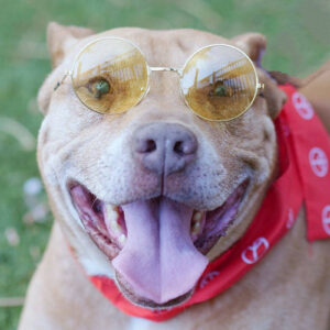 the-animal-foundation-waiving-adoption-fees-through-july-11